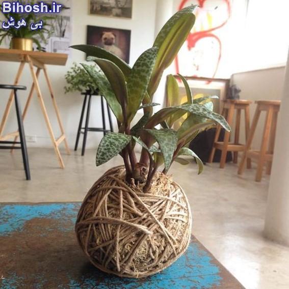 ساخت گلدان با پوست نارگیل
