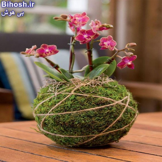 گلدان نارگیلی