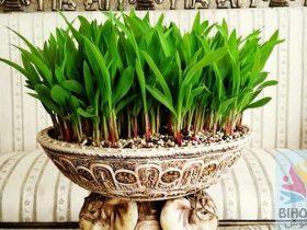 انواع مدل سبزه عید 1400