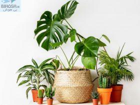 معرفی گیاهان همیشه سبز خانگی (بخش اول)