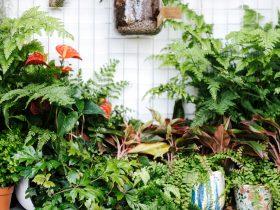 معرفی محبوبترین گیاهان لوکس آپارتمانی