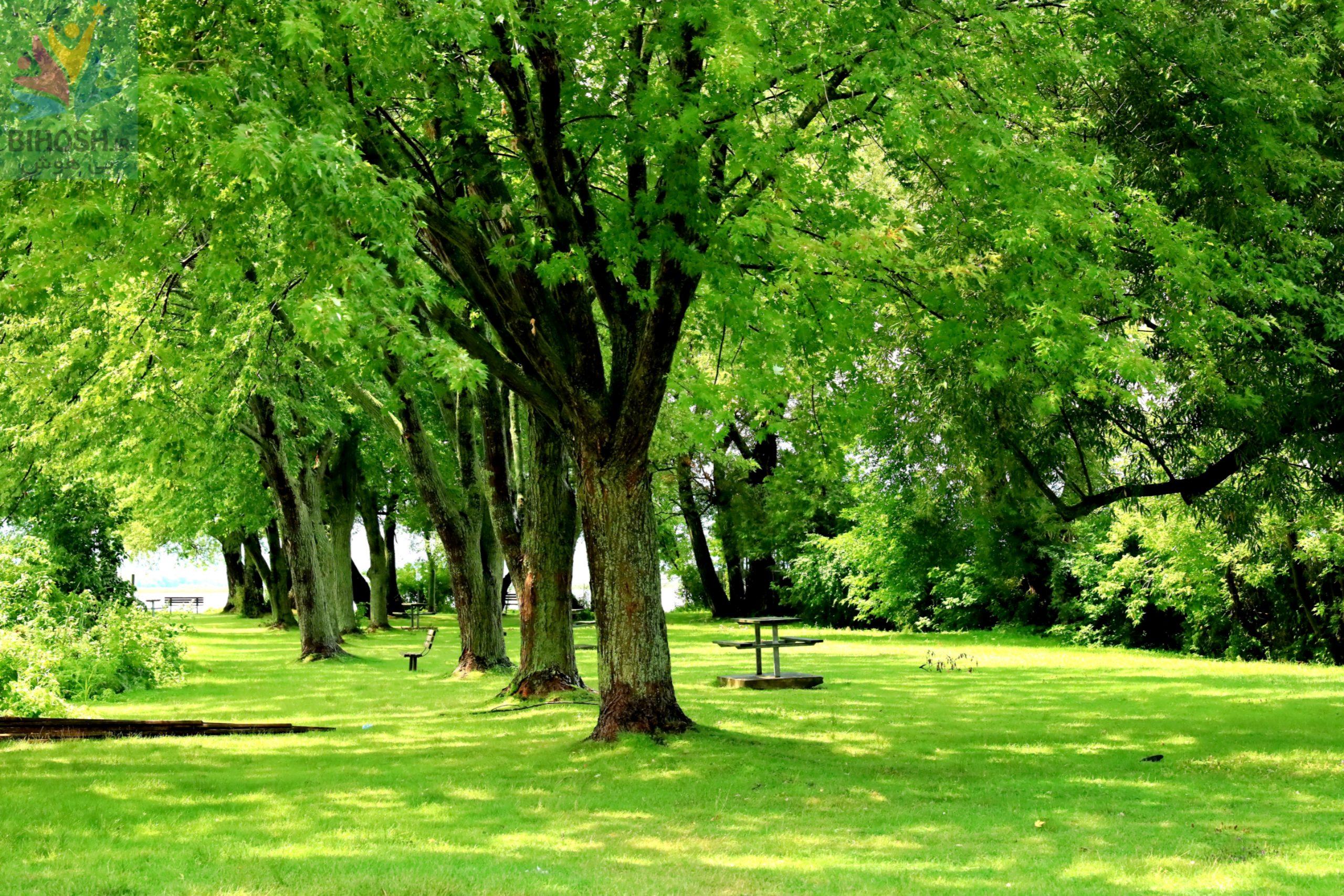 پارک کایوپویستو