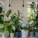 معرفی محبوب ترین گیاهان خانگی 2021