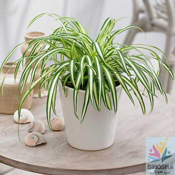 19 گیاه آپارتمانی سمی را بشناسید
